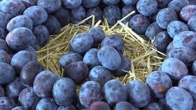 Fuits de la variedad del Prunus del ciruelo, árbol muy resistente, en el mercado de la ciudad, el sabor muy jugoso y la acidez na almacen de video