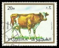 Animals, Cow, Bos primigenius taurus Royalty Free Stock Photography