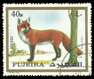 Red Fox, Vulpes vulpes. Fujairah - stamp printed 1972, Multicolor Memorable issue of offset printing, Topic Fauna and Mammals, Series Animals, Red Fox, Vulpes Stock Photos