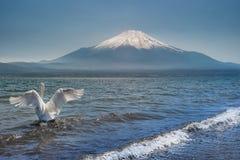 Fuji łabędź fotografia stock
