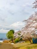 Fuji ΑΜ και ρόδινα δέντρα ανθών κερασιών στην Ιαπωνία Στοκ Φωτογραφία