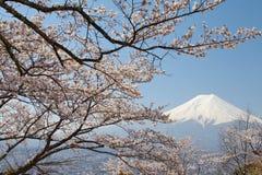 Fuji βουνών και sakura ανθών κερασιών Στοκ Φωτογραφία
