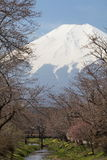 Fuji βουνών και sakura ανθών κερασιών Στοκ Εικόνες