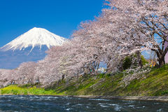 Fuji βουνών και sakura ανθών κερασιών Στοκ εικόνα με δικαίωμα ελεύθερης χρήσης