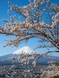 Fuji βουνών και sakura ανθών κερασιών Στοκ εικόνες με δικαίωμα ελεύθερης χρήσης