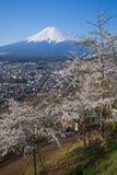 Fuji βουνών και sakura ανθών κερασιών Στοκ φωτογραφίες με δικαίωμα ελεύθερης χρήσης