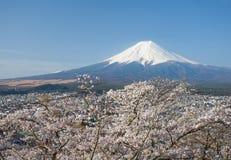 Fuji βουνών και sakura ανθών κερασιών Στοκ Εικόνα