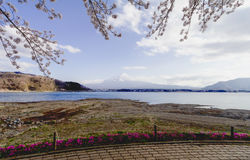 Fuji και λίμνη ΑΜ στην εποχή sakura ανθών κερασιών Στοκ Εικόνα
