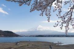 Fuji και λίμνη ΑΜ στην εποχή sakura ανθών κερασιών Στοκ Φωτογραφία