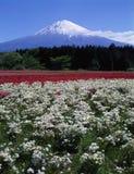 Fuji 375 mt Zdjęcia Stock