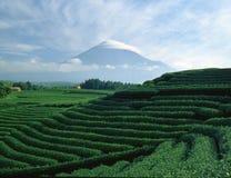 Fuji 407 mt Fotografia Stock