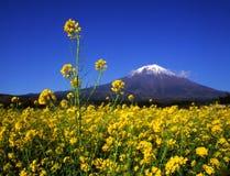 Fuji 453 mt zdjęcie stock