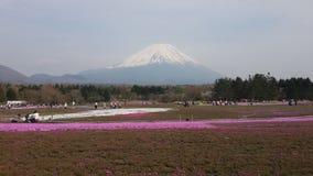 fuji Stock Fotografie