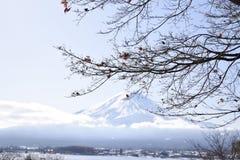 fuji Photo libre de droits