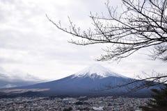 fuji Photo stock