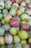 Fuji Apples. Pile of mostly green and some red Fuji Apples at the farmers market royalty free stock image