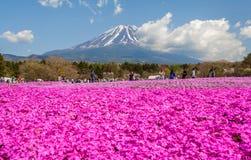 fuji berg Arkivbilder