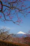 fuji berg Arkivfoton
