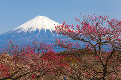 fuji berg Arkivfoto