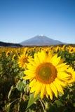 fuji berg Royaltyfria Bilder