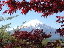 Fuji-Berg im Frühjahr Lizenzfreies Stockbild