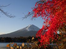 Fuji-Berg mit Rotahornblatt und Tourismus auf Boot im See Lizenzfreies Stockfoto
