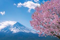 Fuji berg och körsbärsröda blomningar i våren, Japan royaltyfria bilder