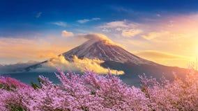 Fuji berg och körsbärsröda blomningar i våren, Japan royaltyfri fotografi