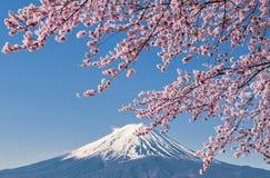 Fuji berg och rosa färger Sakura Branches på Kawaguchiko fotografering för bildbyråer