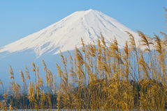 Fuji with clear sky Stock Image