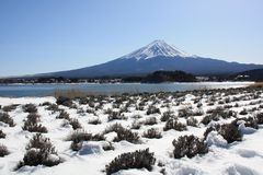 Fuji in de winter Stock Afbeeldingen
