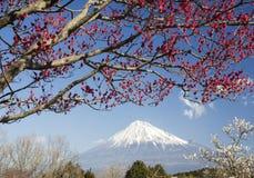 Fuji-DG 35 di Mt Fotografie Stock