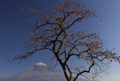 Fuji-dg 40 do Mt Fotografia de Stock