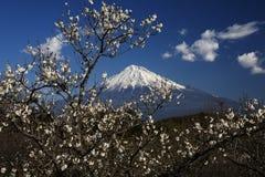 Fuji-DG 50 di Mt Fotografia Stock