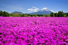 Fuji góra i menchii Shibazakura ogród przy Shizuoka Zdjęcia Stock