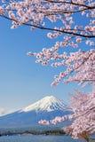 Fuji góra Sakura i menchia Rozgałęziamy się przy Kawaguchiko Obrazy Royalty Free
