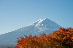 Fuji góry i czerwonego klonu urlop w jesieni przyprawia Obraz Stock