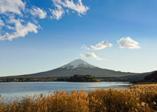 Fuji with golden flower. Fuji lanscape view with a lake and golden flower before sunset Stock Photo