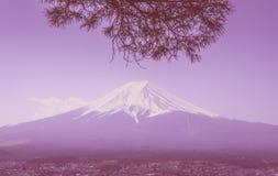 Fuji im Winter gestaltet durch trockenen Fallbaum in der rosa Farbe lizenzfreie stockfotografie
