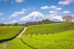 Fuji, Japón en el Mt Fuji y campos del té fotos de archivo libres de regalías