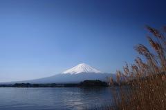 Fuji Japan Royaltyfri Fotografi