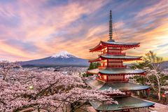 Fuji Japan in Spring. Fujiyoshida, Japan at Chureito Pagoda and Mt. Fuji in the spring with cherry blossoms royalty free stock image