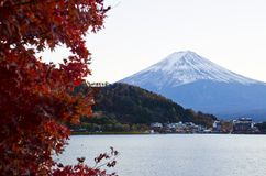 Fuji and Maples Stock Images