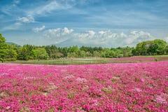 Fuji med fältet av rosa mossa på den Shibazakura festivalen, Japan arkivbilder