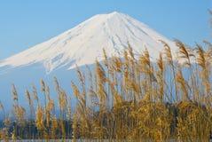 Fuji met duidelijke hemel Stock Afbeelding