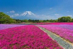 Fuji mit rosa Moos Stockbild