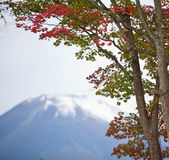 Fuji mountain. With red leaves at japan stock images