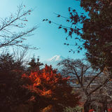 Fuji mountain in autumn Stock Images