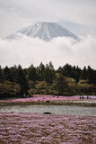 Fuji mountain Close up. Fuji Mountain and Pink moss Flowers Stock Image