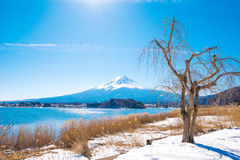 Fuji mountain and grass flower from Kawaguchiko lake Stock Photo